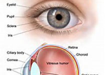 FDA批准Allergan的生物可降解植入药物Durysta,用于降低青光眼患者的眼内压